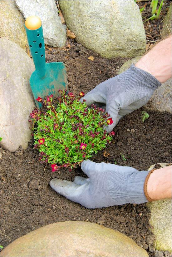Посадка растений в рокарий