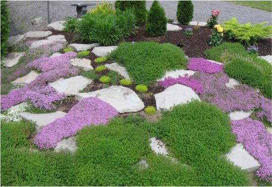 Почвопокровные растения в композиции рокария