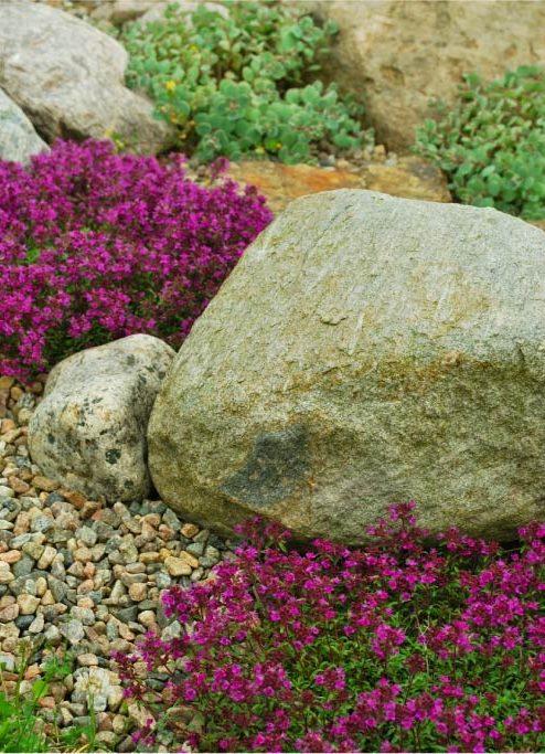 Три главных камня в рокарии