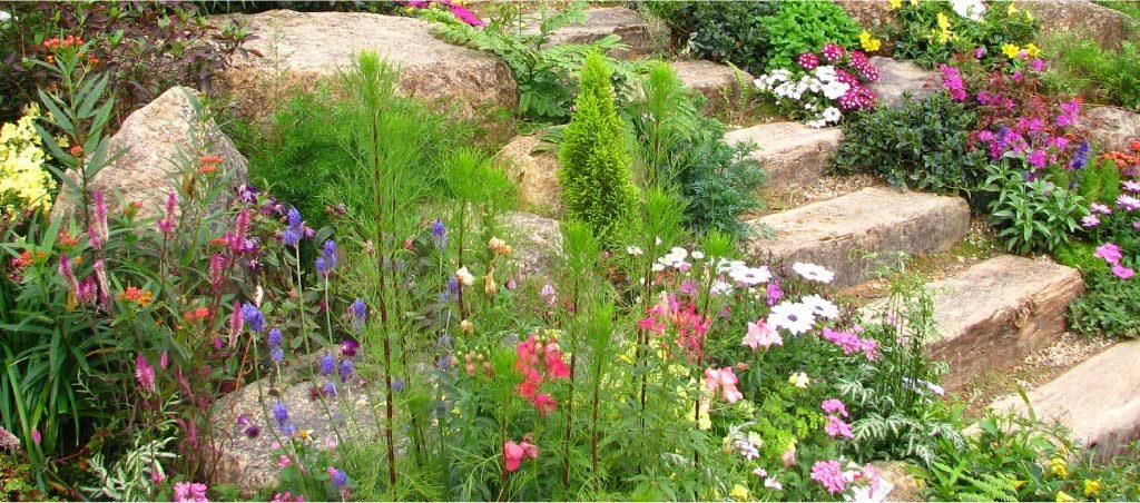 Растения и цветы для альпийской горки или рокария